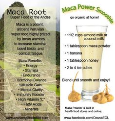 Hypothyroidism Diet Recipes How Can Maca Benefit You? Maca is a potent, ancient Peruvian superfood highly prized by Incan warriors to increase stamina, boost libido, and combat fatigue. - Get the Entire Hypothyroidism Revolution System Today Power Smoothie, Smoothie Drinks, Juice Smoothie, Healthy Smoothies, Healthy Drinks, Smoothie Recipes, Diet Recipes, Simple Smoothies, Green Smoothies