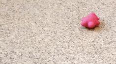 This Baby Armadillo Is Improbably Adorable | via io9