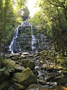 Nelson Falls, a delightful waterfall, west coast #Tasmania ~ article and photo for think-tasmania.com Australian Continent, Beautiful Waterfalls, Beautiful Landscapes, Sand And Water, Water Photography, Vanuatu, Largest Countries, Small Island, Beautiful Places In The World
