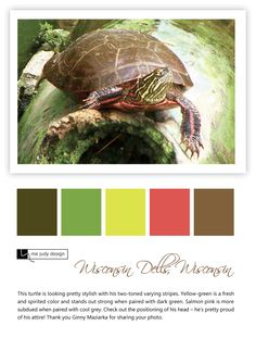 A fashionable turtle sporting two-toned varying stripes! - Wildlife influence - Location: Wisconsin Dells, Wisconsin - mejudydesign.com
