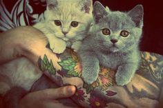 #cat say  #hibitch