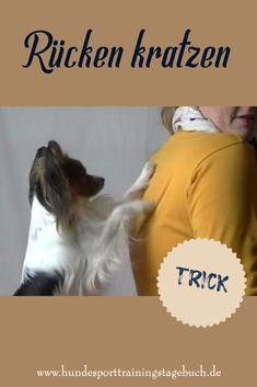 Wie du deinem #Hund beibringst, dir den Rücken zu kratzen Dog Love, Dog Training, Dog Cat, Pets, Lady, Labrador, Creatures, Kitty, Hacks