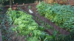 Permaculture and paillis on pinterest for Permaculture terrasses et buttes