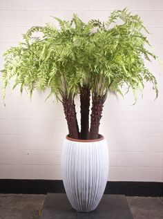 Replica Landscapes are a specialist in artificial plants, flowers and trees with a full range of realistic, low-maintenance artificial products. Indoor Palms, Tropical Plants, Artificial Plants, Trees To Plant, Planter Pots, Fat, Landscape, Floral, Flowers
