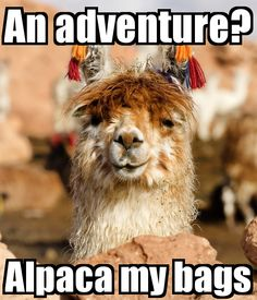 Kids // Childrens Hoodie Joke Funny Adventure? Alpaca My Bags
