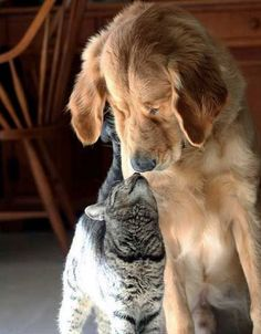 Pet and Dog Photo Gallery