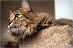 5 Natural Ways to Get Rid of Fleas on Cats. http://everydayroots.com/flea-remedies-for-cats