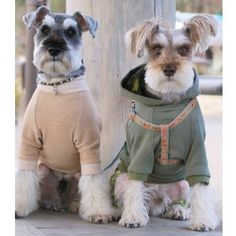 schnauzers in fancy dress