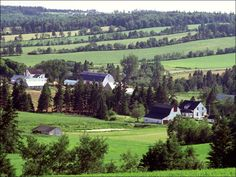 PEI...Stevenson and Smith farms New Glasgow.