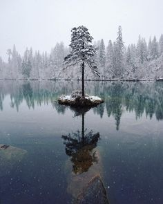 What a pretty winter landscape. A tiny little island with one resolute tree, in the middle of a partially frozen lake, covered in snow. Such a pretty sight!