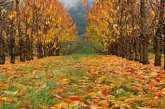 Fall, Creston BC Beautiful Places To Live, Coeur D'alene, British Columbia, Wilderness, Beautiful Pictures, Wildlife, Canada, The Incredibles, Tours