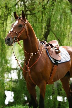 equestrian-trends: Stubben Breastplate with Running Attachmentwww.equestrian-trends.tumblr.com