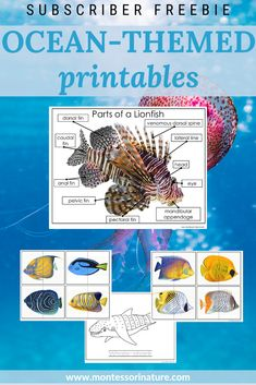 Join our list and download free Ocean themed pritnables for preschool children Ocean Lesson Plans, Preschool Lesson Plans, Free Preschool, Preschool Themes, Preschool Printables, Montessori Activities, Montessori Education, Montessori Toddler, Montessori Materials