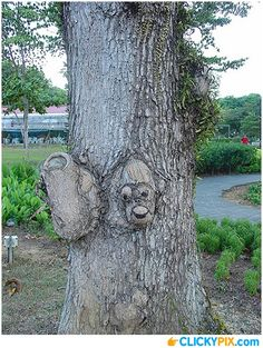 Trees with Faces – 17 Images