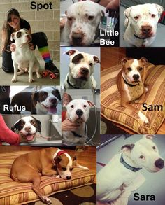 Fosters?  Forevers?  These pups need you!  In and around the Portland Oregon area.