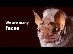 Bat Conservation Int on | Photos, Photography and Bats