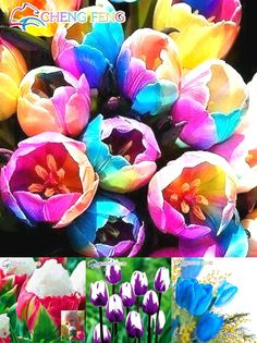 [Visit to Buy] Big Sale 200pcstulip Seeds Tulipa Gesneriana Potted Plants Planting Seasons Flowering Plants 24 Varieties Can Pick Free Shipping #Advertisement