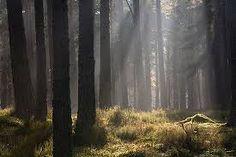 #Pine #Wood #dealers @ http://arunachaltimber.com/