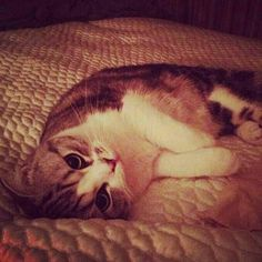 Meredith Swift ♥