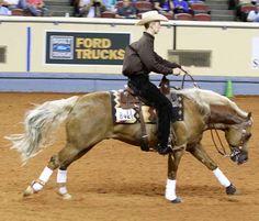 Horse Training for Reining