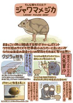 Cute Animal Drawings, Cute Drawings, Pretty Animals, Cute Animals, Mouse Deer, Japanese Animals, Animal Graphic, Kawaii Illustration, Animal Facts