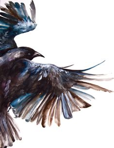 Watercolor Painting, Original Painting, Crow in Flight, Large Painting