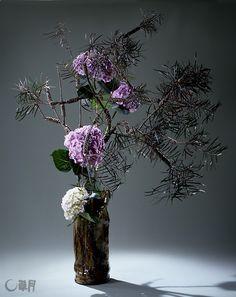 やさしい紫色と白色の大きなあじさいを、きんぽうじゅの奔放な枝ぶりの中にいけます。花器から立ち上がる力強さを、大胆に空間に展開しました。花材:きんぽうじゅ、あじさい 花器:陶器花器(勅使河原宏) Large flowers of soft purple and white hydrangea are placed within free-flowing bottlebrush branches. The powerful flowers soaring from the vase are boldly constructed in the space. Material:Bottlebrush, Hydrangea Container:Ceramic vase by Hiroshi Teshigahara  #ikebana #sogetsu
