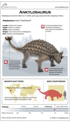Learn about the plated Cretaceous-era dinosaur Ankylosaurus.