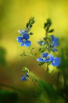 Dandelion, Wildlife, Nature, Flowers, Plants, Animals, Naturaleza, Animales, Animaux