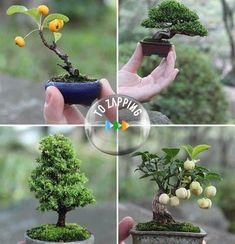 Bonsái a partir de un árbol en estado silvestre El arte del bonsái se originó en China hace unos dos mil años, como objeto de culto para los monjes taoístas