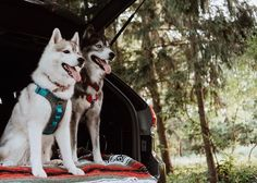 This dog harness is the most comfortable and rugged dog harness for dogs that like to run, hike, and walk with their people. V-Neck construction reduces strain on your dog's neck and shoulders. Dog Harness, Dog Leash, Crafting With Cat Hair, Biking With Dog, Hiking Dogs, Puppy Food, Dog Activities, Dog Travel, Dog Coats