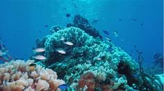 Cozumel, where I FINALLY became a certified scuba diver