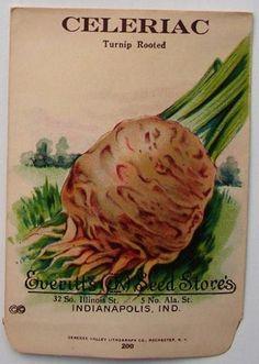 EVERITT'S SEED STORE, Celeriac 200, Vintage Seed Packet