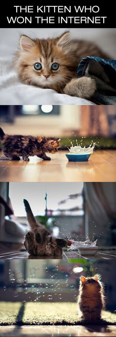 The kitty that will win your heart… (click for more, your heart will melt)