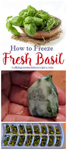 How to freeze fresh basil from your garden to use long after we say goodbye to summer from Walking on Sunshine Recipes. Freezer Cooking, Freezer Meals, Cooking Tips, Cooking Recipes, Healthy Recipes, Freezer Recipes, Cooking School, Veggie Recipes, Fall Recipes