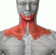 Face exercises to improve the platysma muscle: This group of muscles when toned holds your neck and jaw line upward. With age the muscles may sag. Lack of skin and muscle tone encourages the placement of fat layers beneath the muscle sheath. Double Chin Exercises, Neck Exercises, Facial Exercises, Stretches, Face Exercises For Jawline, Sport Fitness, Fitness Diet, Fitness Motivation, Health Fitness