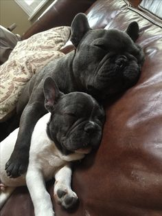 Theo & Finn napping