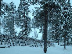 Pyhä-Luosto National Park, Karhunjuomalampi hut in December 2012