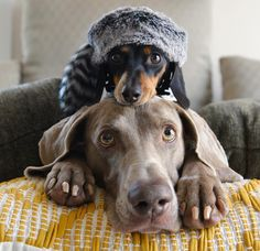 Hat on a dog on a dog.                                                                                                                                                                                 Mehr