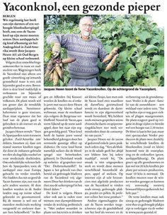20111019 Yaconknol artikel.jpg (800×1033)