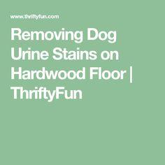 Removing Dog Urine Stains on Hardwood Floor Hardwood Floor Cleaner, Hardwood Floors, Flooring, Tide Powder, Powder Laundry Soap, Urine Stains, Dog Urine, Floor Stain, Black Stains