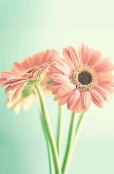 Fondo de flores tonos pasteles