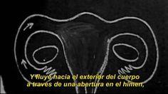 """Documentário dirigido por Diana Fabiánová. """"La Luna en Ti"""" é uma visão limpa sobre o tema-tabú da menstruação, e questiona a realidade social de mulheres e homens de forma aprofundada ao que a sociedade está disposta a admitir.  O documentário aborda o tema através de referencias pessoais e coletivas, desafiando, de esta maneira, nossas idéias preconcebidas sobre o que é a Feminilidade."""