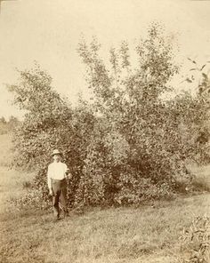 The Life of Laura Ingalls Wilder: Part 7 - Old Photo Archive - Vintage Photos and Historical Photos Old Pictures, Old Photos, Vintage Photos, Laura Ingalls Wilder, Ingalls Family, Portraits, Real People, Wisconsin, Mansfield Missouri