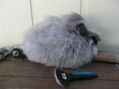 Plucking vs. Brushing - Angora rabbits are a great alternative to sheep and alpacas for a small homestead.