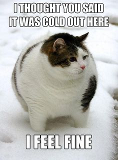 There's nothing like photos of adorable fat cats to inspire laughter and maybe inspire your human to go on their diet. Check out these super cute fat cats. Baby Cats, Cats And Kittens, Funny Kittens, I Love Cats, Cute Cats, Funny Animals, Cute Animals, Animal Memes, Funniest Animals