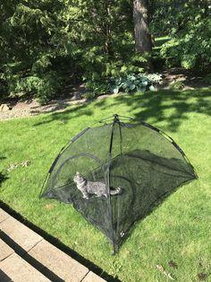 My cat enjoying his new cat tent! Diy Cat Tent, Diy Tent, Diy Old Tshirts, Animals And Pets, Cute Animals, Adventure Cat, Cat Cave, Cat Room, Pet Furniture