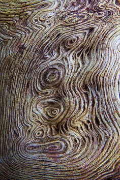 knotted wood 02 | Flickr – Dr Steven Murray  I love the texture and patterns of woods with their whorls and knots.