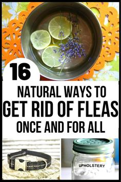 Flea Spray For House, Flea In House, Flea And Tick Spray, Fleas On Puppies, Kill Fleas On Dogs, Cat Fleas, Home Remedies For Fleas, Dog Flea Remedies, Flea Remedy For Dogs