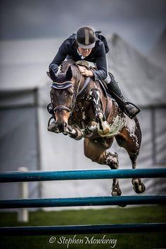 Bling du Rouet Balou Du Rouet x... - ridiculously gorgeous equines